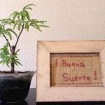 Buena suerte ボアソルチの店内の様子の写真